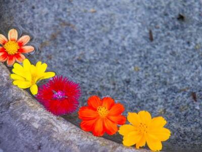 水に浮かぶ花びら